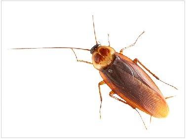Выводим тараканов