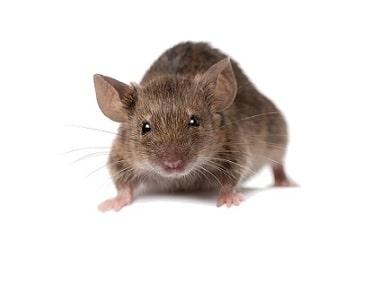 Выводим мышей