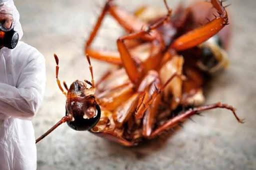 Уничтожение тараканов в Костроме
